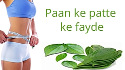 Paan ke patte ke fayde (Health benefits of Betel Leaves)